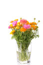 Buttercups bouquet of bright multicolor in vase over white Royalty Free Stock Photography