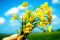 Buttercups flower blossom floret sky azure blue Royalty Free Stock Photography