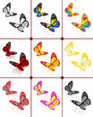 Butterflies botany set on a white background Stock Photos
