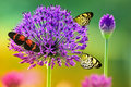 Butterflies on colorful flower Stock Image