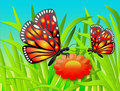 Butterflies and flower Royalty Free Stock Photos