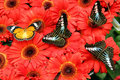 Butterflies on flowers Stock Photos