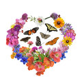 Butterflies and flowers in heart shape assorted isolated on white background Stock Photos
