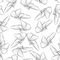 Butterflies fly outline. Seamless pattern with insect. The outline nature in the spring.