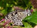 Butterflies Hug Royalty Free Stock Photo