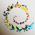 Butterflies illustration of a set Royalty Free Stock Photos