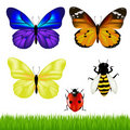 Butterflies And Insect Set. Vector Stock Photos