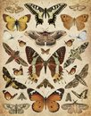 Butterflies and moths Royalty Free Stock Photo