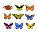 Butterflies set vector of isolated on a white background Royalty Free Stock Images