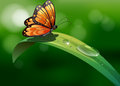A butterfly above a leaf with water drops illustration of Stock Images