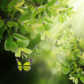 Butterfly on the background of spring leaves Royalty Free Stock Photo