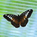 Butterfly beautiful with open wings Stock Image