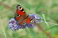 Butterfly beautiful on the summer flower Stock Photos