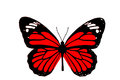 Butterfly black and red with white background Stock Photo