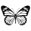 Butterfly black and white, view from above, isolated on white background, vector insect, monochrome illustration, coloring book, b Royalty Free Stock Photo
