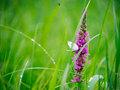 Butterfly on a blade of flower in spring Royalty Free Stock Photo