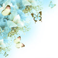 Butterfly, blue hydrangeas and white irises