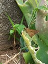 butterfly on the cactus leaf Royalty Free Stock Photo