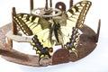 Butterfly on clock mechanism