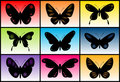 Butterfly collection Royalty Free Stock Photography