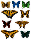 Butterfly Collection Stock Images