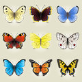 Butterfly collection highly detailed icons Royalty Free Stock Photos