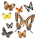 Butterfly collection varieties of butterflies isolated on white background Stock Photos