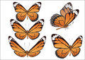 The butterfly with color wings. Vector. Stock Photo