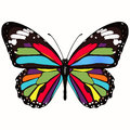 Butterfly with colorful wings, view from above, isolated on white background. Vector illustration, banner, card, poster