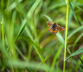 Butterfly colorfull standing on the grass Stock Photo