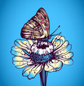 Butterfly on a daisy Royalty Free Stock Images