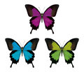 Butterfly detailed illustration present even the scales on the wings the hairs on the back Stock Image