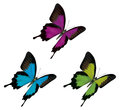 Butterfly detailed illustration present even the scales on the wings the hairs on the back Royalty Free Stock Images