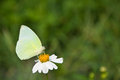 A butterfly eat nectar from flower Royalty Free Stock Photo