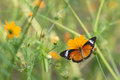Butterfly eat syrup from flower Royalty Free Stock Photo