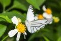 Butterfly feeding on little flower macro Stock Images