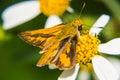 Butterfly feeding on little flower macro Stock Photo