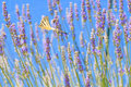 Butterfly in flight Royalty Free Stock Photo