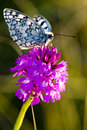 Butterfly with flower Royalty Free Stock Images