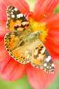 Butterfly on flower Royalty Free Stock Photos