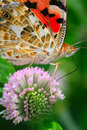 The butterfly and flower Stock Images