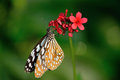 Butterfly and flower beautiful sitting in the Royalty Free Stock Images
