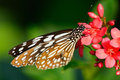Butterfly and flower beautiful sitting in the Royalty Free Stock Photography
