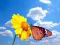 Butterfly on flower with cloudy sky Royalty Free Stock Photography
