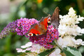 Butterfly on flower colorful and bokeh light effect background Stock Photo