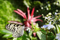 Butterfly and flower on green background. Royalty Free Stock Photo