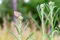Butterfly on a flower meadow Stock Photo