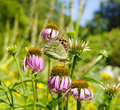 Butterfly on flower in summer garden Stock Photos