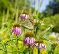 Butterfly on flower in summer garden Stock Photos