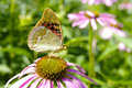 Butterfly on flower in summer garden Royalty Free Stock Images